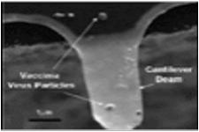 ウィルス検知器構造